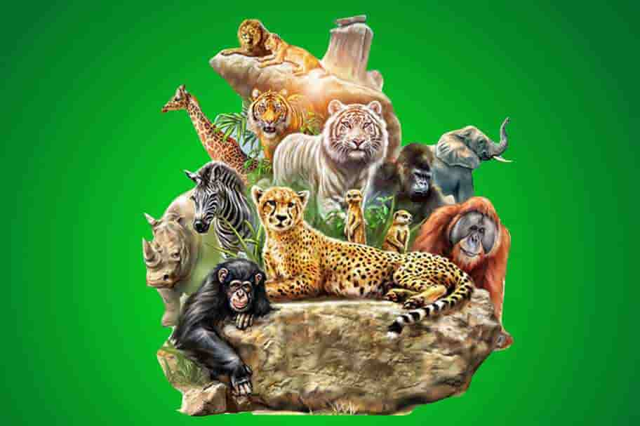 Wild Life Quiz for upper primary stage classes